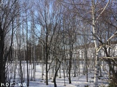 雪どけ進む美瑛散歩_e0326953_15152038.jpg