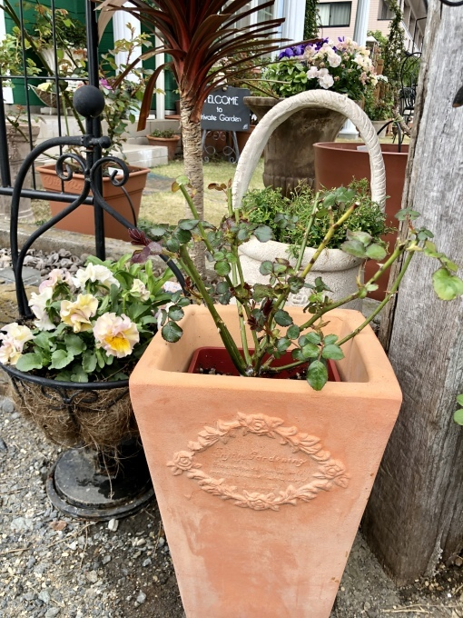 バラの蕾、クレマチスの蕾、レウィシアの蕾♡と、出開きばかりのカルトナージュ(T . T)_a0396654_20123948.jpeg