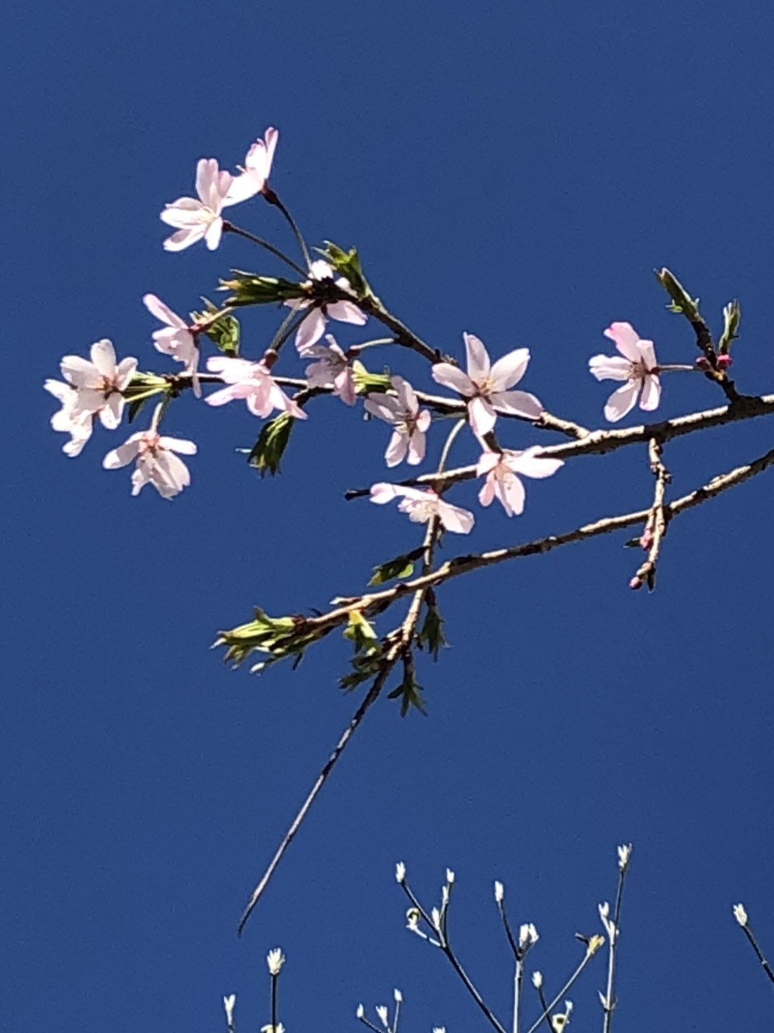 「春なのに…みんな、みんなの心にサクラ咲け。」今日は嬉しくて切ない山田パンダ_b0096957_17593667.jpg