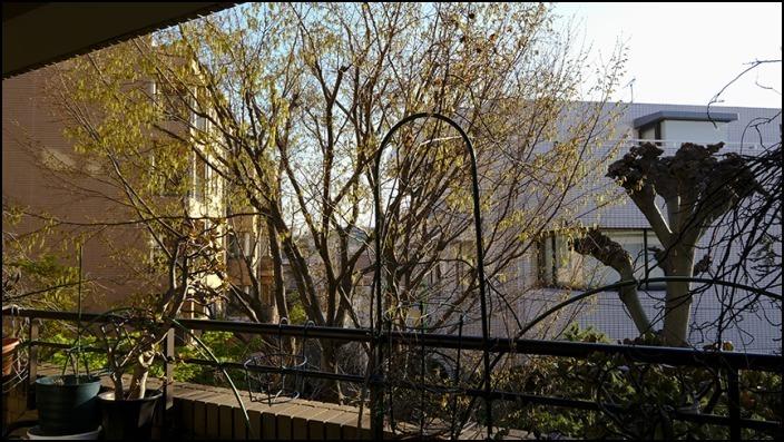 病院の帰りに霊園の桜を愛でることができました 🌸春🌸爛🌸漫🌸_a0031363_03443069.jpg