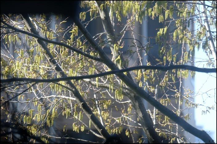 病院の帰りに霊園の桜を愛でることができました 🌸春🌸爛🌸漫🌸_a0031363_03460726.jpg