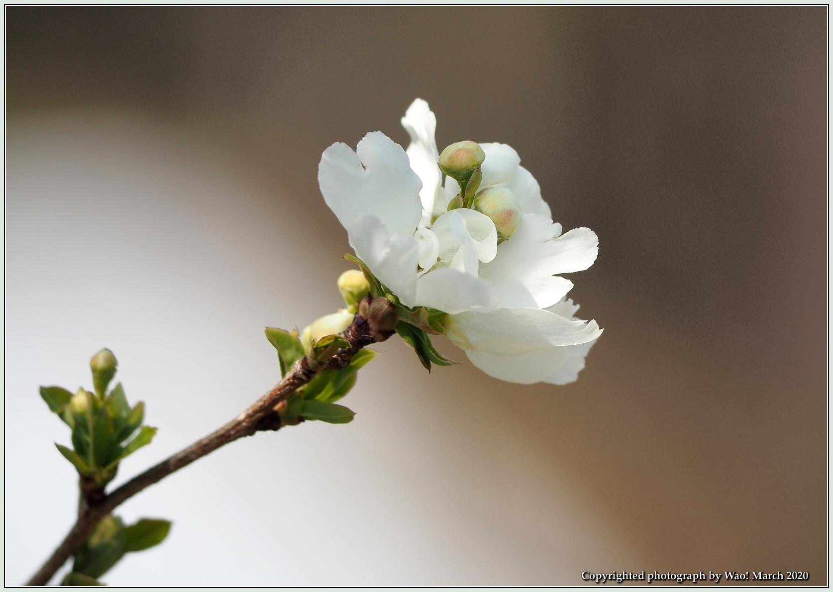 春のブロッサムズ_c0198669_22233396.jpg