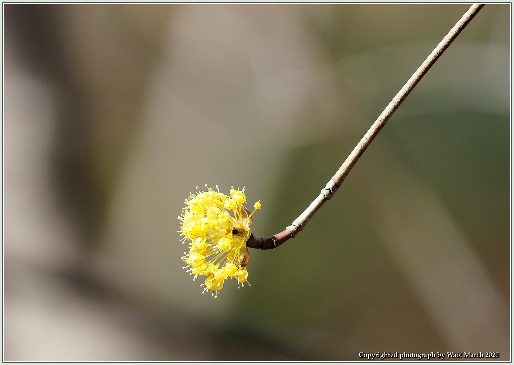 春のブロッサムズ_c0198669_22260214.jpg
