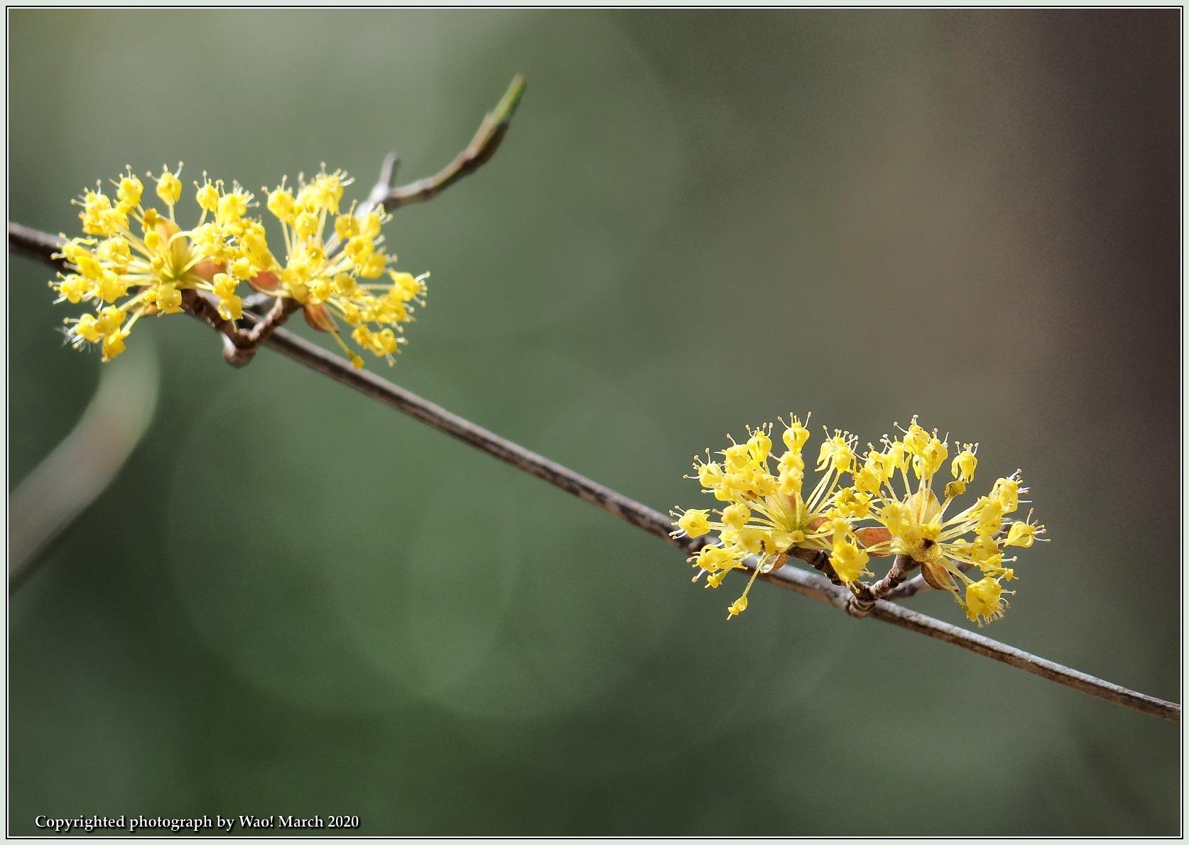 春のブロッサムズ_c0198669_22261028.jpg
