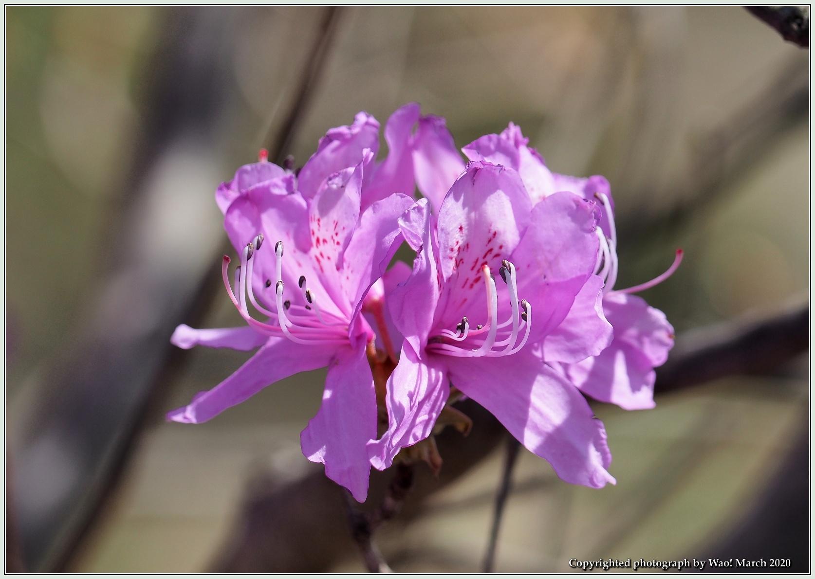 春のブロッサムズ_c0198669_22261764.jpg
