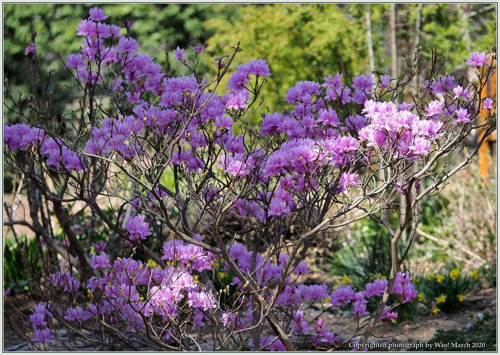 春のブロッサムズ_c0198669_22263263.jpg