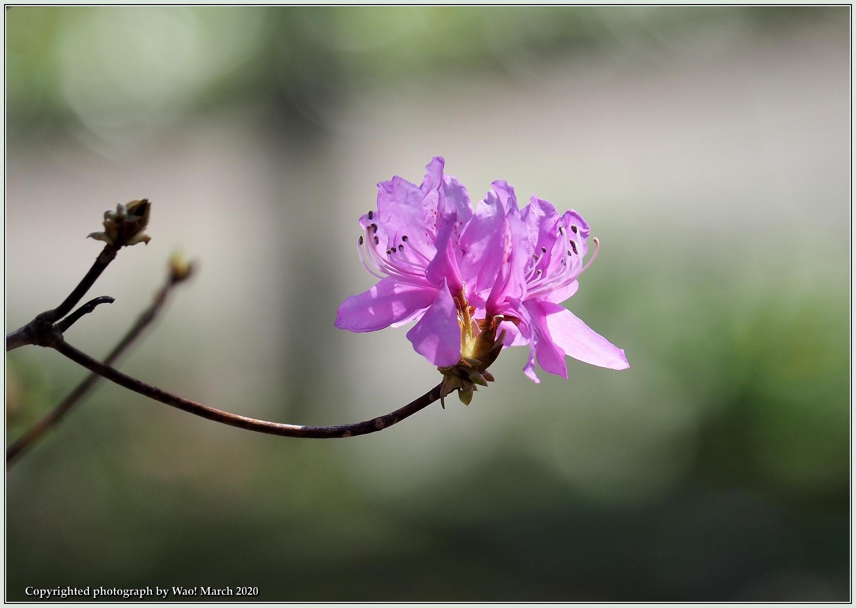 春のブロッサムズ_c0198669_22264469.jpg