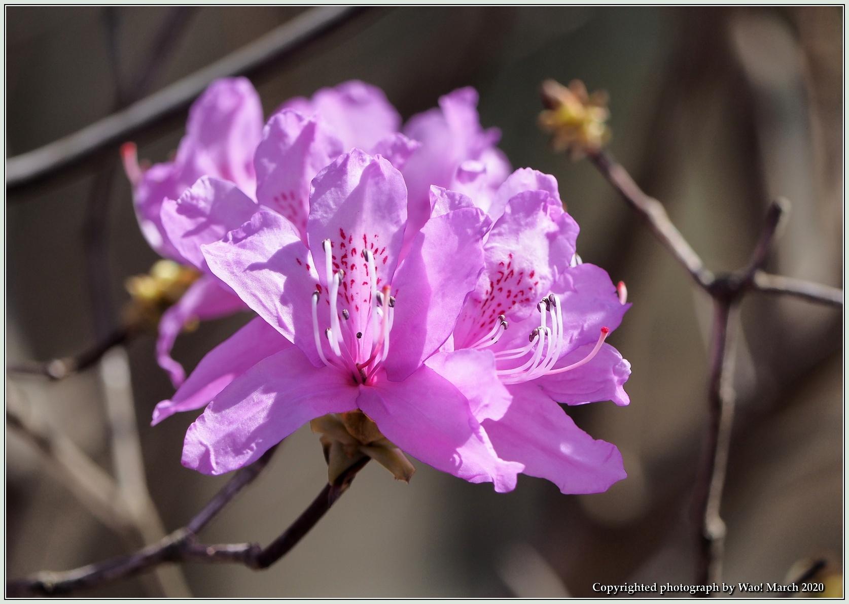 春のブロッサムズ_c0198669_22264890.jpg