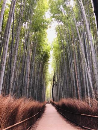 京都旅④~嵯峨野はひっそりとしてました_e0078071_14490862.jpg