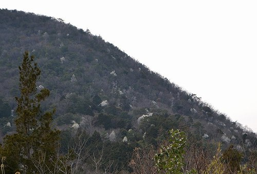 タムシバ絶景再び 追っかけてきた甲斐がありました_b0102572_00061020.jpg