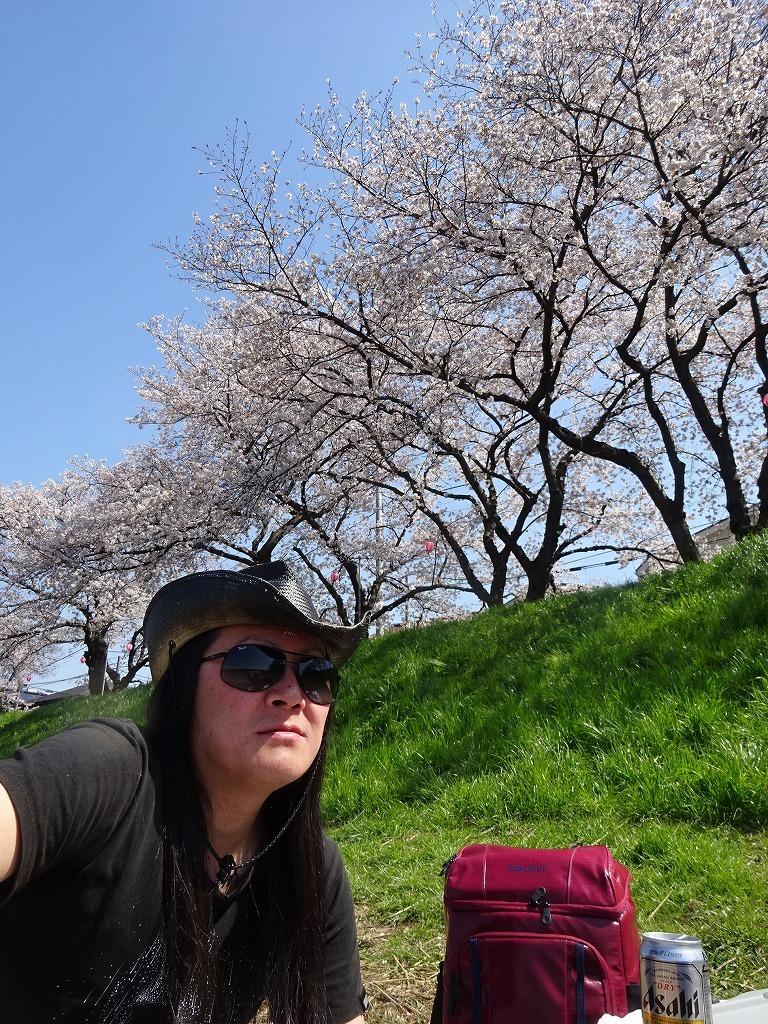 志木花見!近所の柳瀬川にて、暑かった!半袖でも汗ばんだ昨日_d0061678_12022933.jpg
