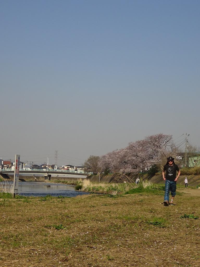 志木花見!近所の柳瀬川にて、暑かった!半袖でも汗ばんだ昨日_d0061678_12025449.jpg