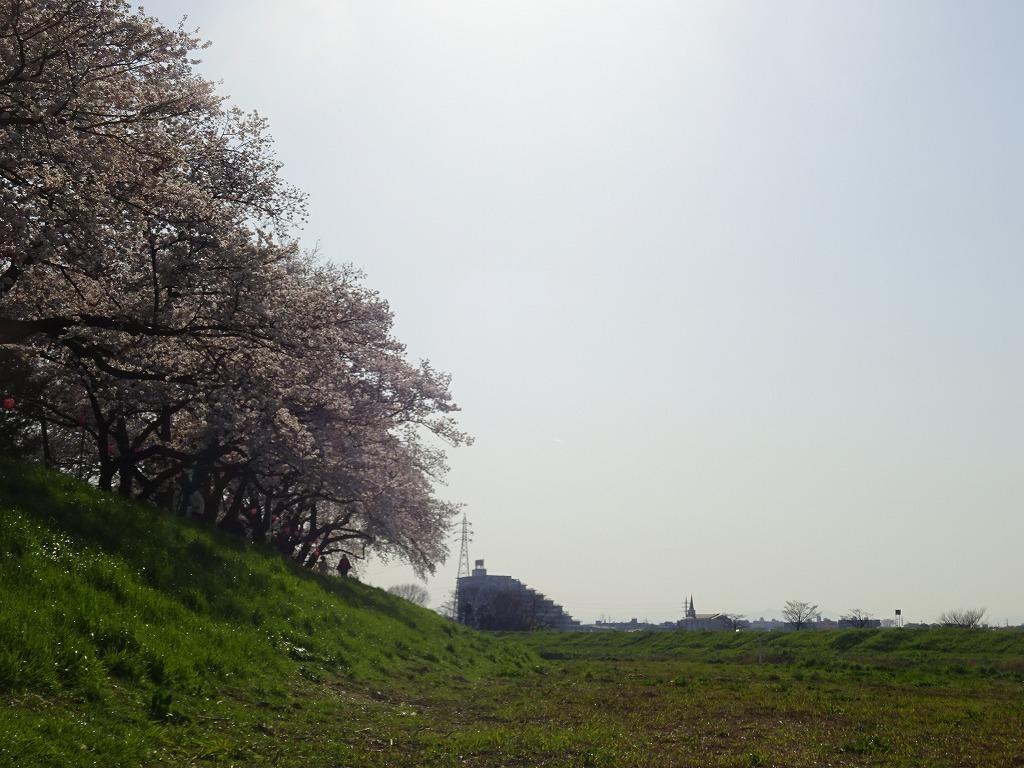 志木花見!近所の柳瀬川にて、暑かった!半袖でも汗ばんだ昨日_d0061678_12041805.jpg