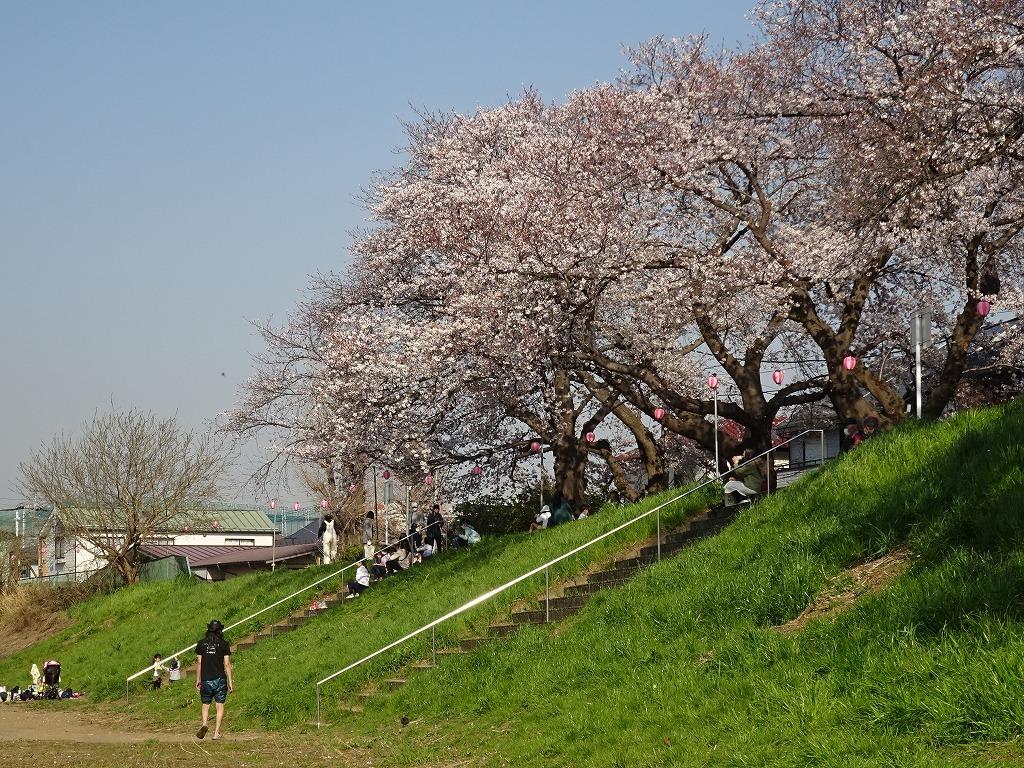 志木花見!近所の柳瀬川にて、暑かった!半袖でも汗ばんだ昨日_d0061678_12041894.jpg
