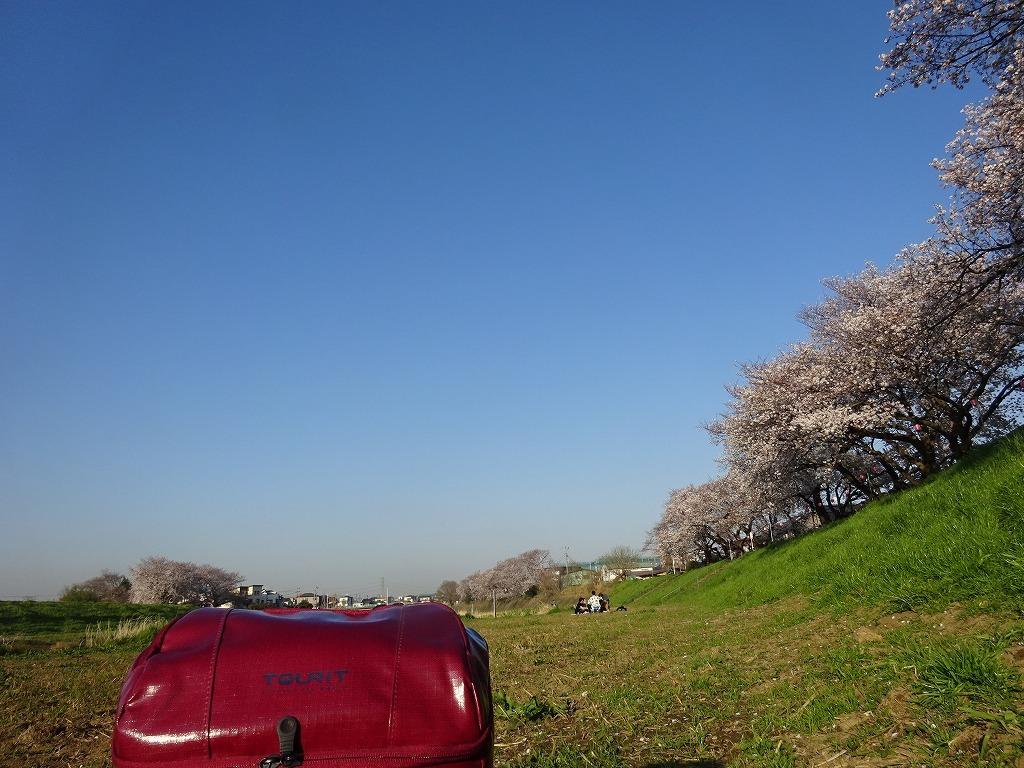 志木花見!近所の柳瀬川にて、暑かった!半袖でも汗ばんだ昨日_d0061678_12051274.jpg