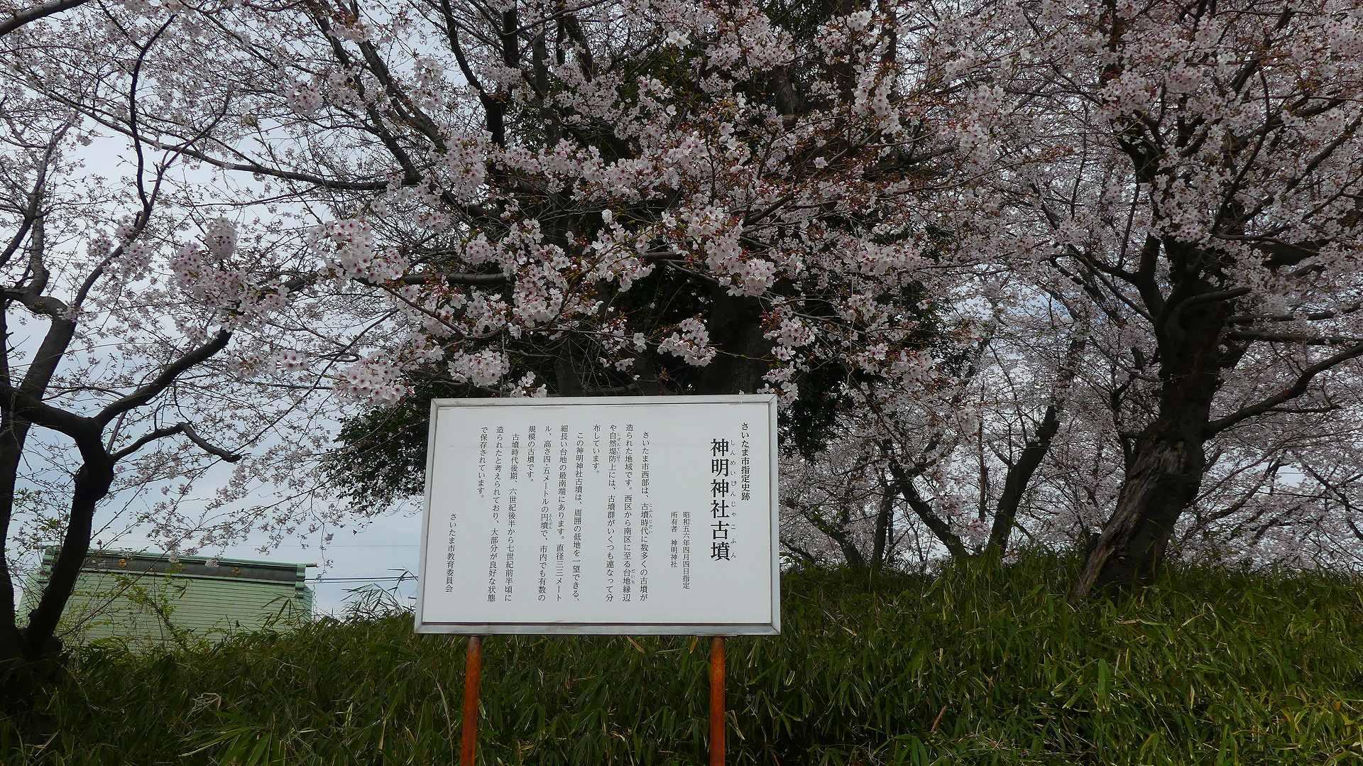 最後の花見だ! ア・ゴー! 【 2020 3/27(金)  】_a0185081_14202777.jpg