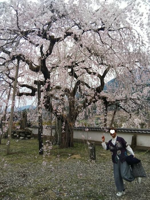 明王寺のしだれ桜_d0043390_21424357.jpg