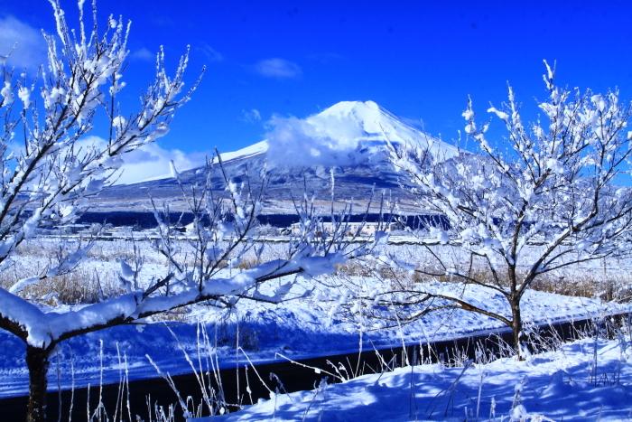 令和2年3月の富士 (21) 忍野の淡雪と富士_e0344396_18064205.jpg
