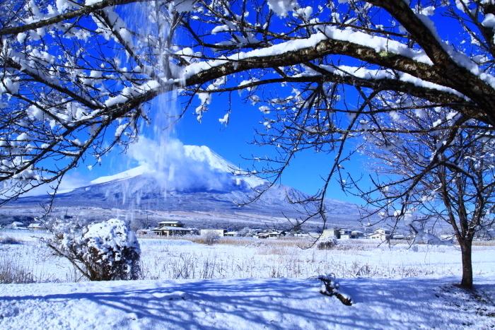 令和2年3月の富士 (21) 忍野の淡雪と富士_e0344396_18064209.jpg