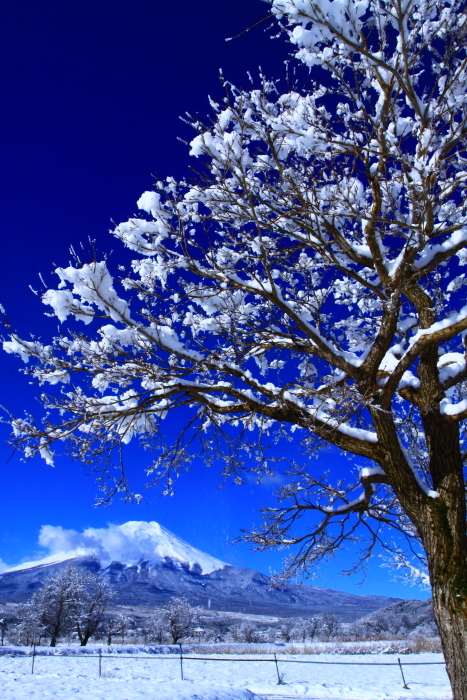 令和2年3月の富士 (21) 忍野の淡雪と富士_e0344396_18064223.jpg