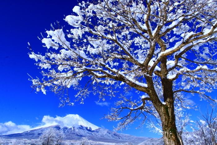 令和2年3月の富士 (21) 忍野の淡雪と富士_e0344396_18064291.jpg