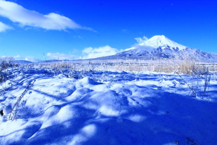 令和2年3月の富士 (21) 忍野の淡雪と富士_e0344396_18064304.jpg