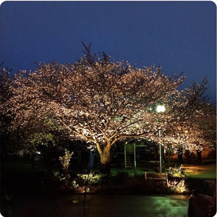 【夜桜カフェ延期のお知らせ】_a0322702_09043421.jpeg