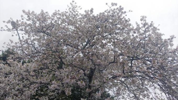 春うらら   2_b0239402_14115560.jpg