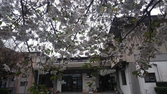 春うらら   2_b0239402_14121072.jpg