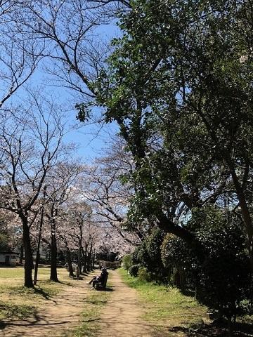 静かなお花見_f0242002_18512245.jpg