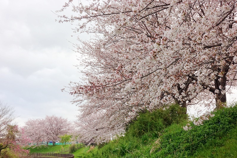 花見(人が少ない所で、、、)_c0187503_14243961.jpg