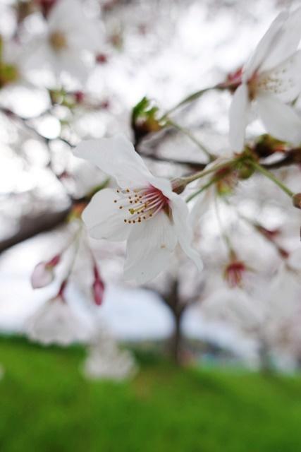 花見(人が少ない所で、、、)_c0187503_14260510.jpg