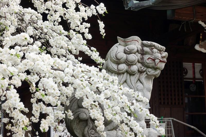 花見(人が少ない所で、、、)_c0187503_14285214.jpg