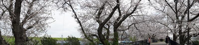 花見(人が少ない所で、、、)_c0187503_14334127.jpg