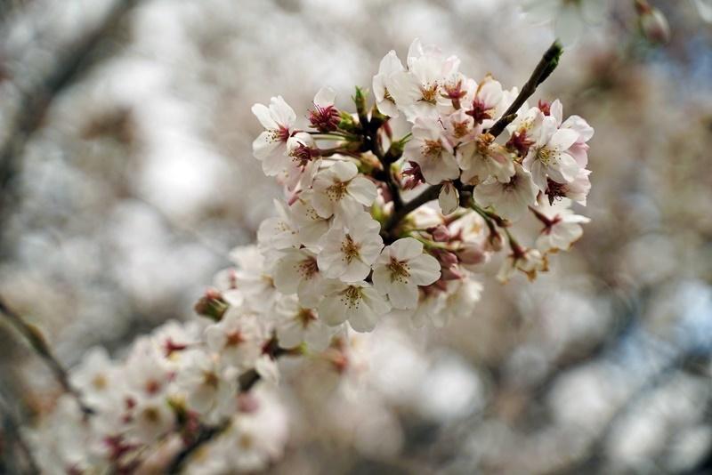 花見(人が少ない所で、、、)_c0187503_14353065.jpg