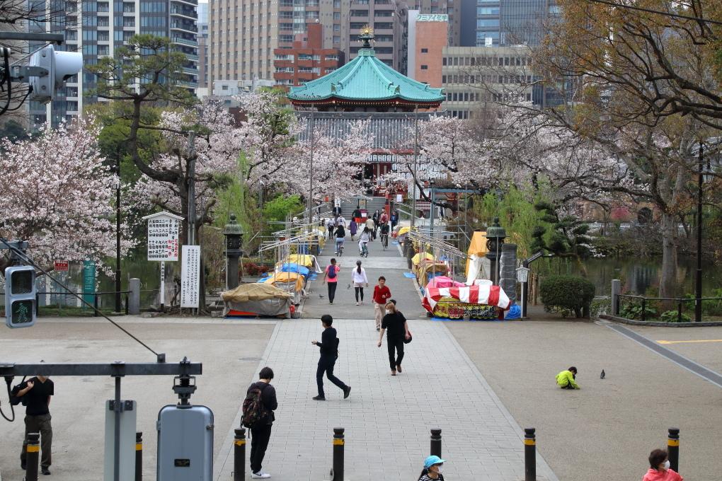 桜 - 2014年・磐越西線 -_b0190710_19475160.jpg