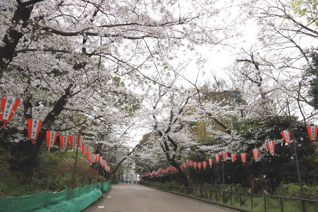 桜 - 2014年・磐越西線 -_b0190710_19475210.jpg