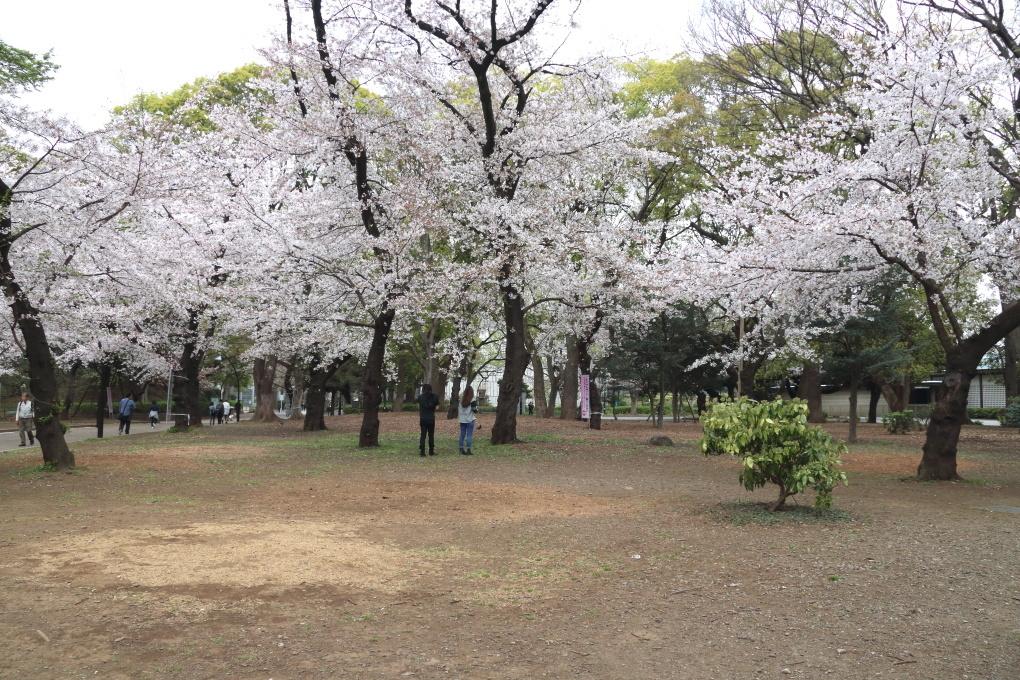 桜 - 2014年・磐越西線 -_b0190710_19475251.jpg
