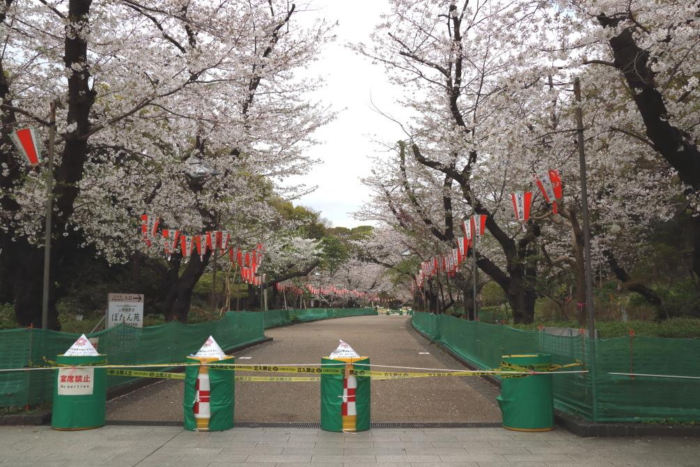 桜 - 2014年・磐越西線 -_b0190710_19475272.jpg