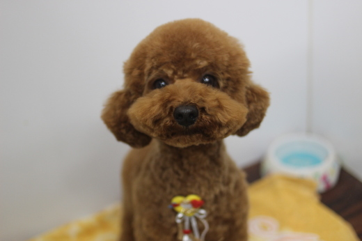 3月22日ご来店のワンちゃんです!!_b0130018_09234339.jpg
