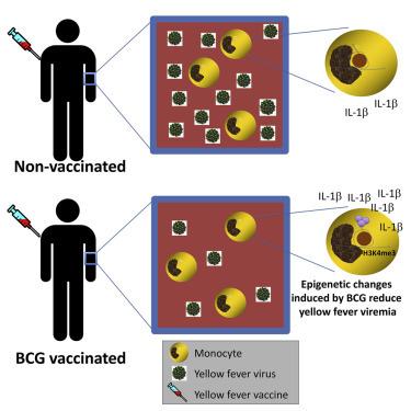 【さらに追記しました】新型コロナウイルスとBCG_d0028322_17241042.jpg