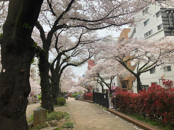 今年の桜_c0190424_16564791.jpg