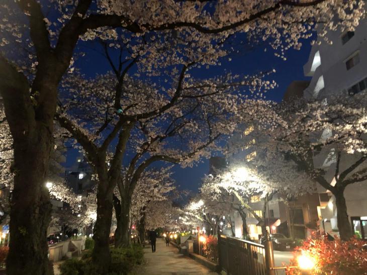 今年の桜_c0190424_16565229.jpg