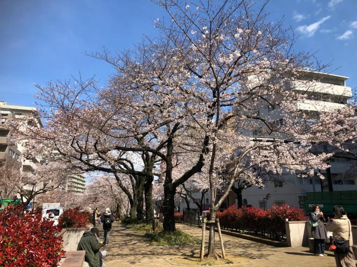 今年の桜_c0190424_16565384.jpg