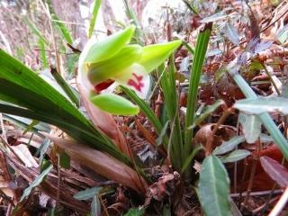 小さな春が_e0030924_09333766.jpg