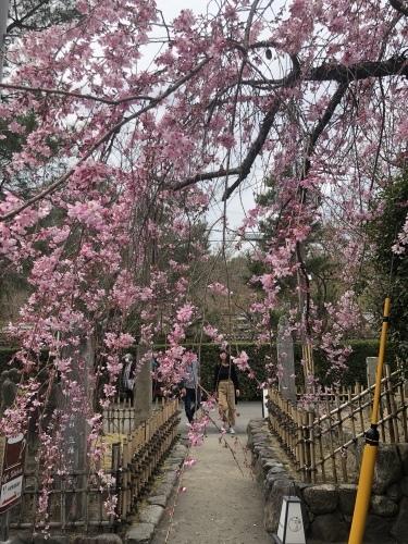 桜の季節に…_a0197730_23335123.jpeg