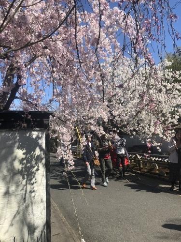 桜の季節に…_a0197730_23342129.jpeg