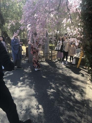 桜の季節に…_a0197730_23345433.jpeg