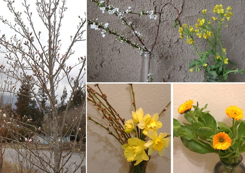 春の色_a0212730_18264855.jpg