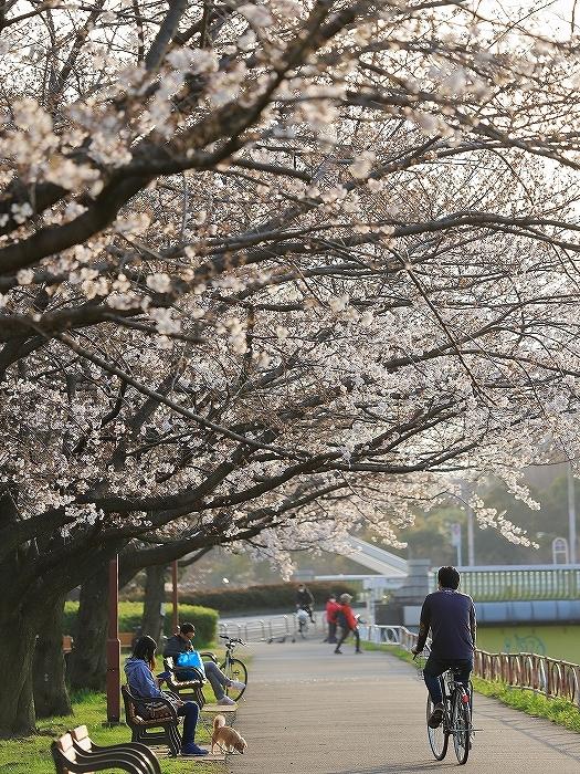 近所の桜_f0348831_20244955.jpg